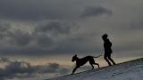 Дружба человека и собаки уже более 14 000 лет