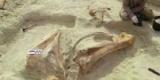 Ученые обнаружили скелет доисторического слона