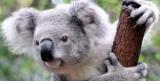 Ученые знают, что животное под угрозой исчезновения в массы